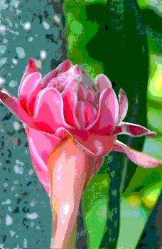 20110422031725-tropical-flower031