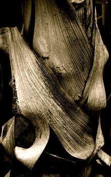 20110422093430-palm