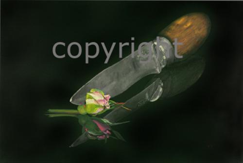 20110423030445-186_born_to_be_circumcised_70x70_c