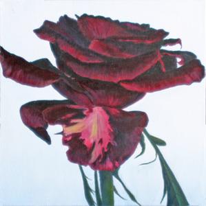 20110423151558-blackmagicrose