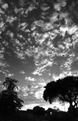 20110423190054-jhicks-torrance_savannah_2