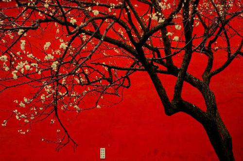 20110424165140-robinson_chinared