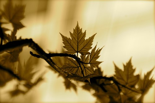 20110425112331-louis_stanley_jr_tree_leaves