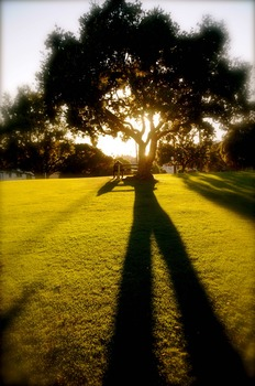 20110425112734-louis_stanley_lawn_shadows