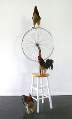 Bicycle_roosters2sm