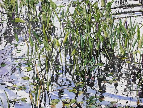20110501171629-pickerel_weed_22x30