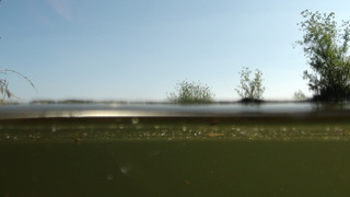 20110509042528-canal__card_