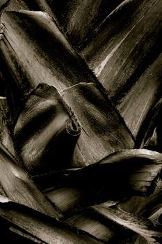 20110512182933-palm_3