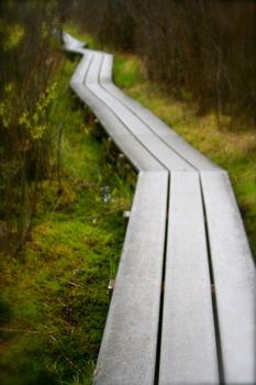 20110512183906-bog_path