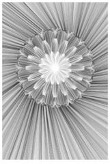 20110513045513-flower-1