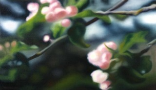 20110518093005-apple-blossoms-3