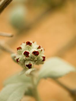 20110523122158-110111_butterfly_bush_-_1114126