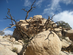 20110526045028-branches_in_the_desert