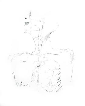 20110527092138-anatomie1