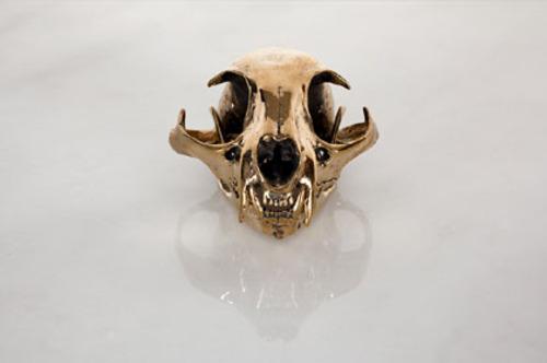 20110602075651-sl_bobcat-skull-above_email