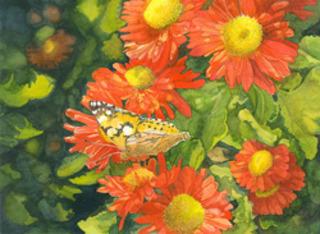 20110606130130-post_image_-_1st_place_-_grey_4_nature_paintedlady