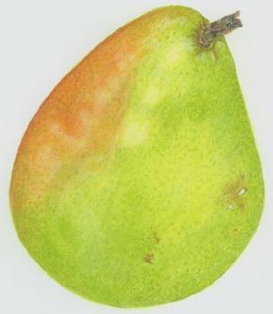 20110609103638-bausch_pear