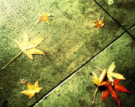 20110610132751-leavesbig