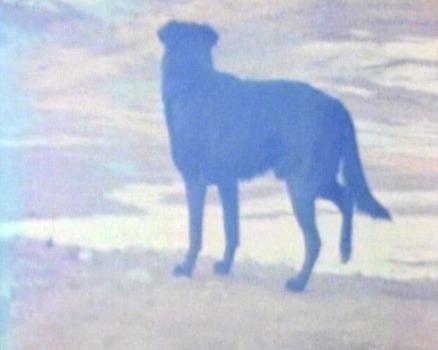 20110610141423-dog