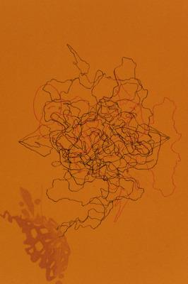 20110615110201-ruthtrotter2_0541