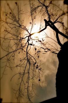 20110616155720-branchesofman1