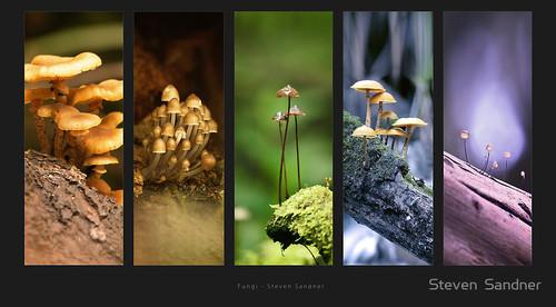 20110622202901-fungi_by_steven__sandner