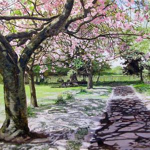 20110628110814-cherry_blossom_spring