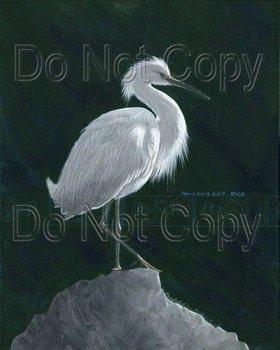 20110701122305-medicine_bird
