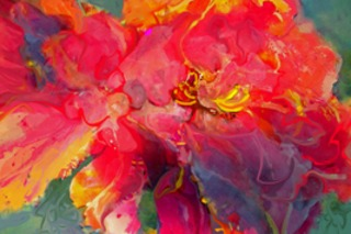 20110703110825-1st_place_-_267_x_178_-_conti_2_colors_peony_poetry