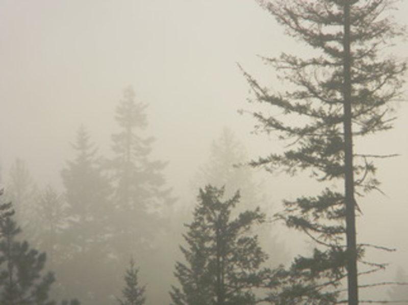 20110705132008-fog_art-1306429953