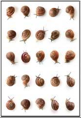20110706123811-snailwebweb