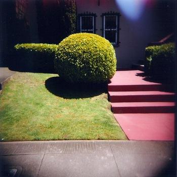 20110707205529-dewey_shrub