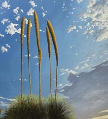Desert_rockets