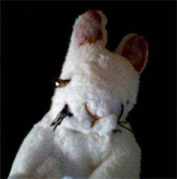 20110801014522-rabbitface