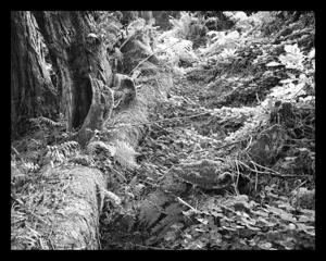 Redwoodfloorblk