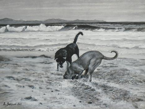 Moonlight State Beach Dogs