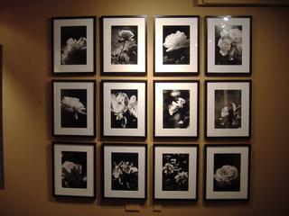 Jj_dozen_roses_series
