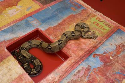 20110817193606-73-anaconda_map_of_chile_2_americas_society__2005