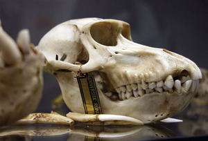 20110819165342-zoologia_front_4x6-b