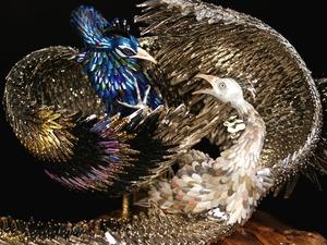 20110826143807-05_roth_plumage