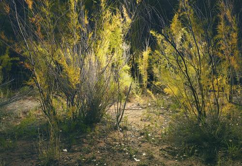 20110904022715-burr_trail__4_2010