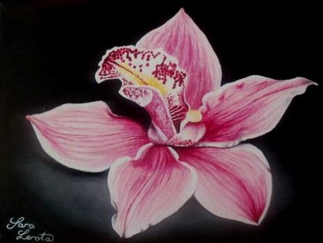 20110908153956-orchidea_797_600