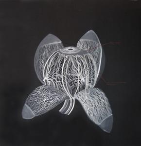 20110909115355-yc-choroid_coat