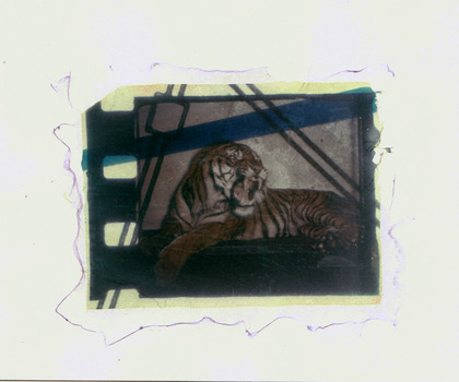 20110909195154-tiger_by_christine_lucy_latimer