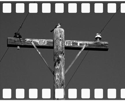 20110910022800-ca_mocking_bird_8x10