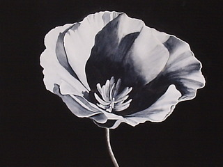 20110910023430-black_poppy