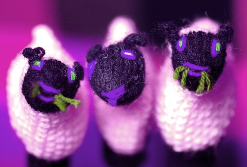 20110910215316-3_little_lambs_in_purple