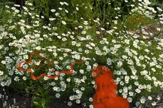 20110911154612-gardenbots_6