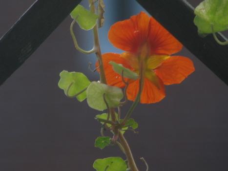 20110912031136-2011august_heli_035orange_floras