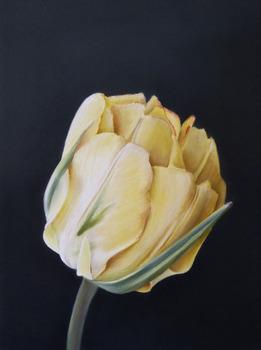 20110922165706-gershom_tulip_1_sm